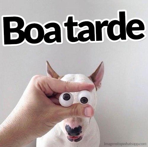 Boa tarde engraçado com um cachorro - Para Whatsapp