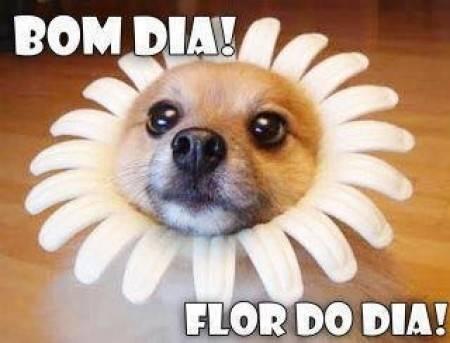 Bom dia flor do dia!
